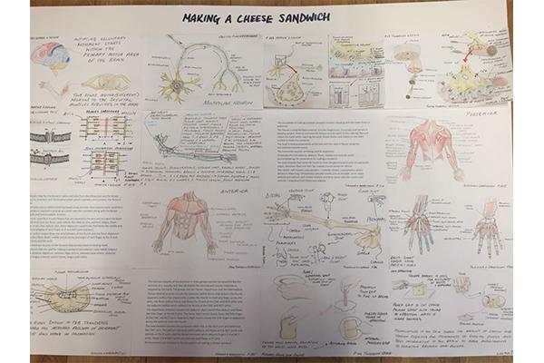 An occupational therapist's analysis of the muscles needed to make a cheese sandwich.