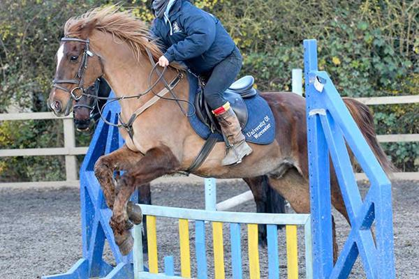 woman on a brown horse jumping a blue obstacle
