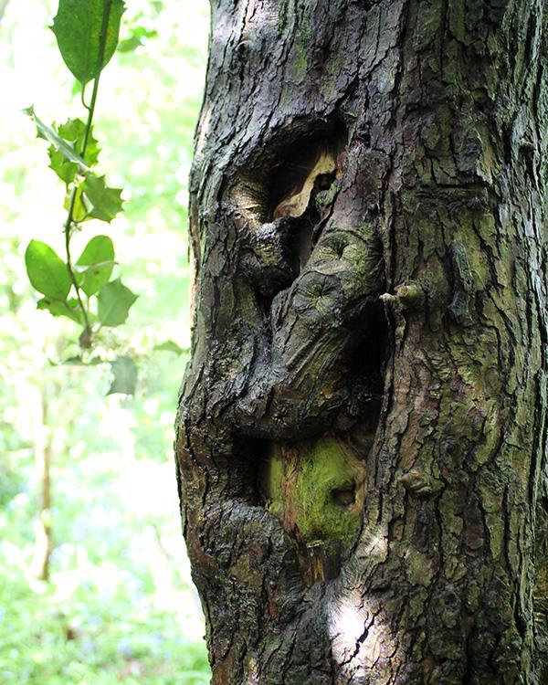 devils-wood-blog-oak-grin