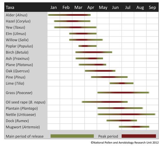 UK Pollen Calendar showing when the main allergenic plants are in flower during the UK's pollen season.