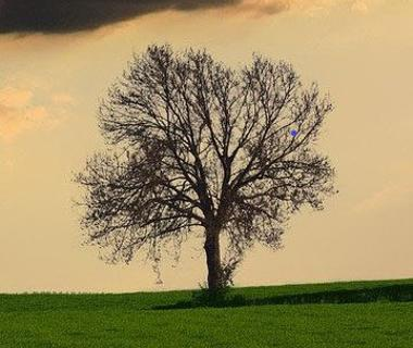 A tree is pictured against an orange sky